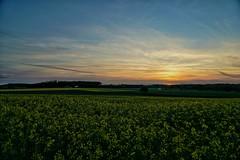 Sonnenuntergang (phozuppel) Tags: sunset germany landscape bayern deutschland sonnenuntergang sony himmel landschaft sonne raps rapsfeld