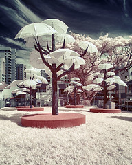 Mystical Umbrella Tree (JamCanSing) Tags: color tree umbrella infrared faux mystical littleindia mythical falsecolor sonysg nex6 sonyalphaprofessionals