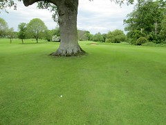 Tewkesbury Golf Course Shot Obscured Gloucester (Bridgemarker Tim) Tags: trees golf gloucester trunks tewkesbury
