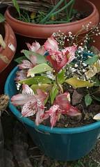 20150821_125728 - Cpia (Megaolhar) Tags: flores toy flickr do dia vale paulo apa bom inverno so campos facebook tuka jordo paraba fazendinha 2016 youtube ibama twitter jardinagem bioma gomeral