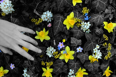 (Mariam Kimeridze) Tags: flowers blue white black green nature grass yellow spring hand outdoor w band selfmade pinc tranger