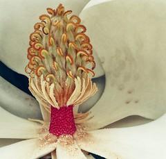 Interiors (twobytwofilms) Tags: pink white flower petals stem bloom magnolia