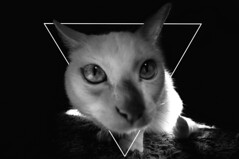 illuminati cat (Zesk MF) Tags: world bw white black strange animal cat nose high eyes nikon triangle sweet sigma outoffocus iso leader katze creature 8mm ruler illuminaten dreieck verschwrung zesk aluhut preisen