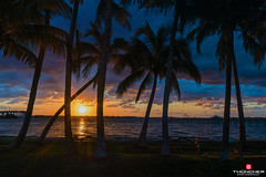 Florida Life: Morning Light (Thncher Photography) Tags: sky beach nature clouds sunrise reflections landscape outdoors island shadows florida sony scenic silhouettes stuart palmtrees tropical fullframe fx waterscape indianriver oceanscape hutchinsonisland palmcity southeastflorida sewallspoint a7r2 ilce7rm2 sonya7r2 zeissfe2870mmf3556oss