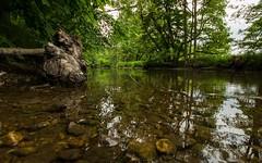 Am Ufer der Eger (Stephanie Mnner Photography) Tags: canon wasser outdoor natur steine bach ufer fluss landschaft wald bume strom baum weitwinkel baumstumpf flussufer
