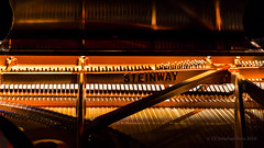 Steinway & Sons (I saw_that) Tags: nikon piano instrument string steinway craftsmanship hss d4s