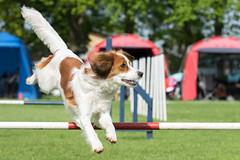 FAN_5992 (Flemming Andersen) Tags: animal outdoor hund agility dogsport hundesport dchharlev