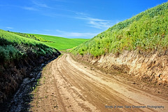 Country Road (Gary Grossman (Traveling to Bosque!)) Tags: landscape spring farm wheat bluesky farmland adventure explore lane pacificnorthwest dirtroad backroads countrylane breadbasket palouse easternwashington byway winterwheat afer drylandfarming garygrossmanphotography shotsofawe