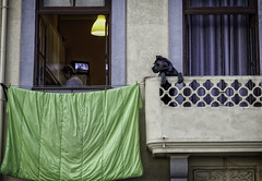 Where Beasts die (lanier67) Tags: street desktop wallpaper urban woman dog color colour green portugal lamp television evening tv background balcony watch itunes porto cover playlist washing foz