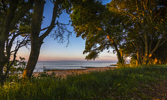 Beautiful Britain (nicklucas2) Tags: beach blue grass green groyne landscape sand sea solent tree