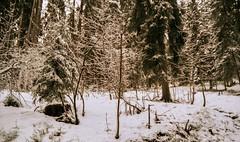 Combloux, lomography, 13 (Patrick.Raymond (2M views)) Tags: montagne alpes xpro lomography nikon neige savoie haute combloux expressyourself beautifulphoto