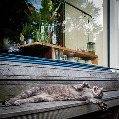 I could sleep forever (PaulHoo) Tags: city urban holland window netherlands cat square spring nikon utrecht lazy tired squareformat lightroom 2016 d700
