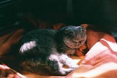 (Kkeina) Tags: light pet film analog cat 35mm 50mm olympus manual om om1