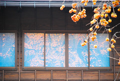 Persimmons on your windows (BeautiFuLifeStuDiO) Tags: travel autumn sky orange plant reflection tree window nature japan fruit village unesco persimmon gifu shirakawago worldheritage shirakawa gassho ogimachi  zukkuri