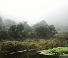 Day 421. Loved walking through the clouds in Puracé. #theworldwalk #travel #colombia