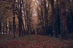 Versailles forest - Foca Sport CF (Nicolas) Tags: park camera autumn brown france castle sport forest automne vintage 200iso versailles 135 chateau marron foret parc cf foca fujicolor c41 yvelines 24x36 nicolasthomas peopler