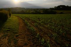 (vieubab) Tags: campagne saintmartin paysage champs chemin calme extrieur arbres atmosphre bois exploitation feuillage haie sonyflickraward lumire nature unlimitedphotos sentier saveearth sony verdure vert