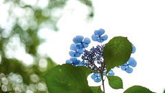 Blau (ai3310X) Tags: none super takumar 50mmf14