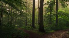 Misty Crossroads (Netsrak) Tags: trees light shadow mist tree green nature fog forest way de deutschland licht haze woods nebel outdoor path natur grün crossroads wald bäume schatten baum nordrheinwestfalen weg pfad waldweg rheinbach kreuzweg