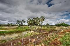 Aps as chuvas no serto (felipe sahd) Tags: brasil cear nordeste independncia semirido sertodecrates