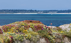 20160616-7D2L6860 (ndall) Tags: scilly stmarys