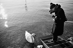 III33 (Lisa Peggy) Tags: schwarzweis blackwhite schwan swan see lake deutschland wasser tier sonne reflexion mensch mann fotograf photographer water treppe stairs bodensee lindau am