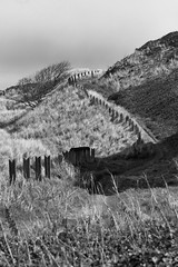 The Dunes, Bamburgh Castle, Northumberland (Hairy Caterpillar) Tags: castle fence dunes northumberland bamburgh