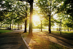 Sunshine through the Trees at Flushing Meadows Park (thebqe) Tags: park nyc newyorkcity trees sunset brown sun green sunshine silhouette spring glow corona flushingmeadowspark flushingmeadowscoronapark queensnewyork nycphoto nycpark silhouettetree newyorkphotography coronanewyork silhouettepeople newyorkcityphotography
