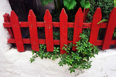 small house garden with plants and a fence (Mikel Martnez de Osaba) Tags: wood white house plant flower color green home nature fence garden wooden leaf bush flora gate colorful natural blossom gardening vibrant small growth bloom picket blooming
