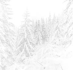 (Zeb Andrews) Tags: winter bw white film oregon forest square mirrorlake seasonal hasselblad mthood pacificnorthwest kodaktrix snowshoeing hasselblad500c