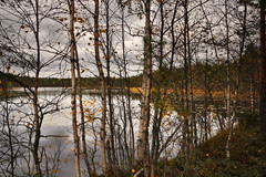Forested Lakeshore (Miguel Virkkunen Carvalho) Tags: travel autumn trees red orange lake fall nature water leaves yellow clouds composition digital forest canon suomi finland landscape photography scenery europe mood outdoor branches north atmosphere scene lakeside september lakeshore nordic birch trunks scandinavia ambience photooftheday picoftheday northerneurope forested bestoftheday canoneos1000d