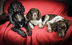 Dogs (Jez22) Tags: copyright dogs jeremysage