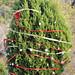 Trees_of_Loop_360_2013_064