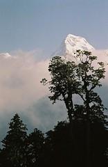 Annapurna South (peak), Annapurnas round trek, Himalaya, Nepal, 2004 (mathieu.LM) Tags: morning nepal mountain tree 2004 clouds analog trekking trek landscape south hill peak round poon himalaya annapurna annapurnas canoneos300 ghorepani