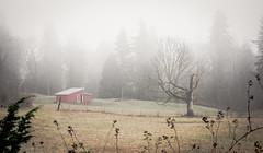 Foggy Morning (dilatedpixels) Tags: morning trees tree grass fog barn farm shed meadow pasture