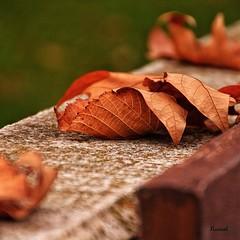 Momentos otoales (nurianl) Tags: naturaleza otoo