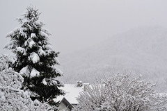 morgen (barbaraivettkirly) Tags: morning snow nature photography photo spring nikon photos picture dslr morgen