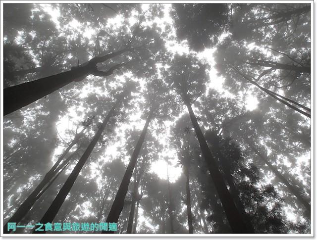 南投溪頭自然教育園區台大image103