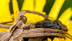 Nursery Web Spider (Mark Hobbs@Chepstow) Tags: cameraphone camera dog wales train photography nikon ship d750 fullframe fx chepstow monmouthshire hgv d7100 markhobbs