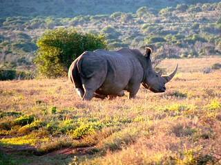 South Africa Hunting Safari - Eastern Cape 26