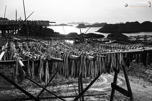 Drying flakes for Stockfish