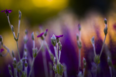 Camera Shy (robert photography & art) Tags: park flowers sunset summer ontario canada flower art nature canon photography photo colours photographer artistic fineart creative passion canon135f2 canon5dmark3