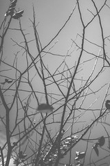 February (Buwaneka Saranga) Tags: trees blackandwhite art branches rubber f2 february twigs helios