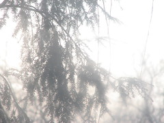 illusion (Autumn's Lull) Tags: trees light nature grey soft branches hidden illusion ethereal dreamy myth delusion