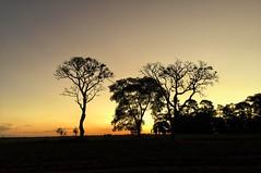 Final de Tarde (pmenge) Tags: contraluz sp monterosa árvores pds iphone silhuetas