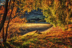 One Autumn Morning (Kevin_Jeffries) Tags: morning travel autumn trees light sunset sea sunlight mist lake holiday color tree art nature water beauty leaves misty contrast sunrise landscape golden early interesting colorful warm flickr moody arch peace shadows natural rich scenic peaceful wideangle duplex frame processing april romantic canopy wanaka goldenhour 18mm jeffries flickrtoday piecesofapril glendhubay queenstownlakesdistrict kevinjeffries