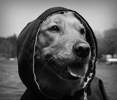 dog pet lake alex water hoodie nikon day michigan humor olive pure banks gowen d3300