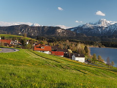 Spring Bavaria Germany - Frhling Bayern Allgu Deutschland (hn.) Tags: sky panorama copyright mountain lake alps berg field germany bayern deutschland bavaria see spring heiconeumeyer europa europe dorf village feld meadow wiese eu himmel bluesky berge mount pasture thealps alpen grassland blauerhimmel hopfen frhling gebirge fssen mountainrange allgu copyrighted schwaben oal hopfensee panoramaseries ostallgu hopfenamsee hhenstrase panoramaserie