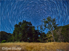 Startrails Around Polaris (Mimi Ditchie) Tags: trees night stars astrophotography moonlight startrails polaris sanluisobispocounty pozo northstar thenorthstar easternsanluisobispocounty lasplitasroad