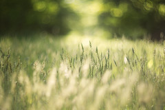Fade into you (Tammy Schild) Tags: blur green nature field grass spring bokeh 402 helios